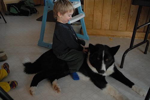 Jaska the Bear Dog
