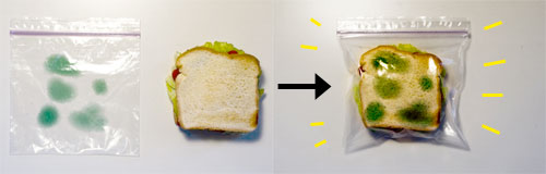 Moldy Lunchbags!