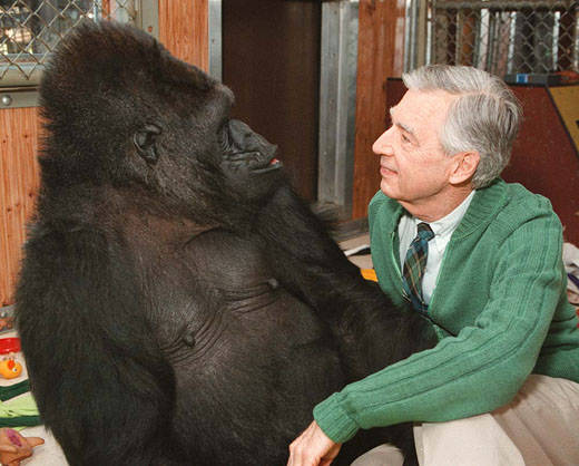 Mr. Rogers and gorilla