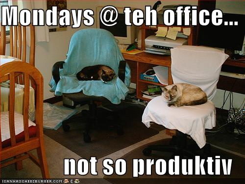 LOLcat mondays